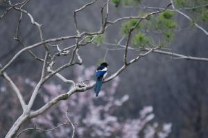 명복공원 환경(까치) 사진
